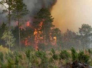 Riaktivizohet vatra e zjarrit në Seman, zjarrfikësit në gatishmëri